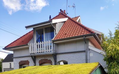La mousse : reine des toitures végétalisées