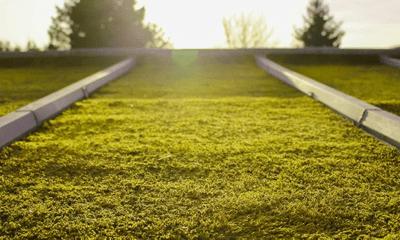 Toit végétalisé: les avantages de passer au vert !