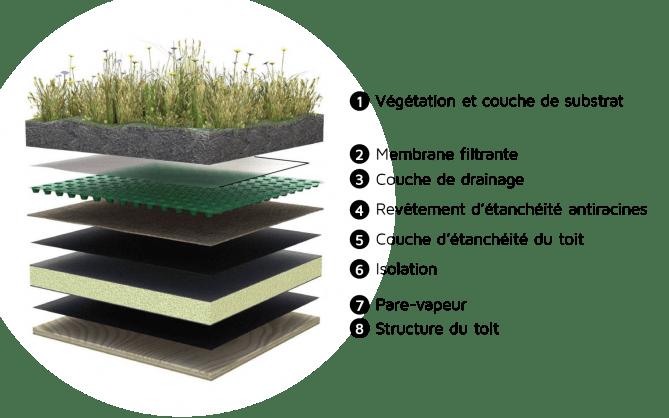 schéma d'un toit végétalisé